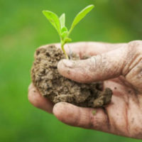 biologico-pianta1