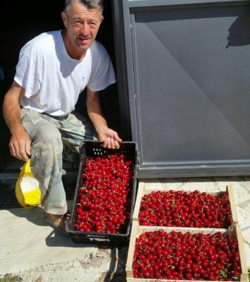 cesare e le ciliegie