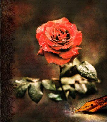 rose-2831613_1280